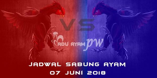 jadwal sabung ayam 07 Juni 2018