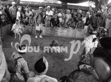 Sejarah Permainan Sabung Ayam Di Indonesia