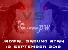 Jadwal Sabung Ayam 13 September 2018