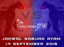 Jadwal Sabung Ayam 14 September 2018