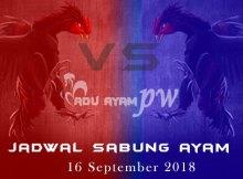 Jadwal Sabung Ayam 16 September 2018