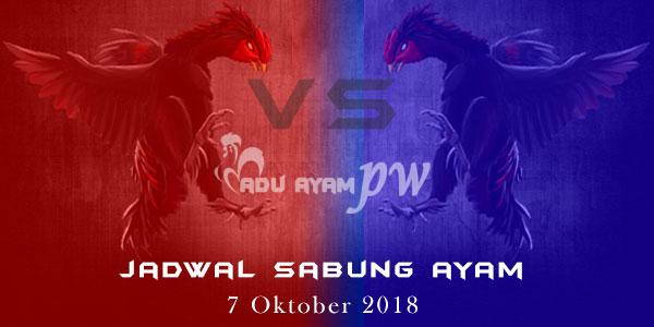 Jadwal Sabung Ayam 7 Oktober 2018
