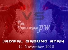 Jadwal Sabung Ayam 11 November 2018