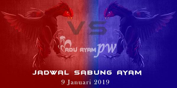 Jadwal Sabung Ayam 9 Januari 2019
