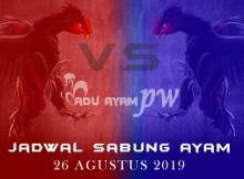 Adu Ayam PW - Jadwal Sabung Ayam 26 Agustus 2019