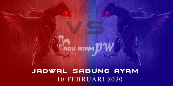 Jadwal Resmi Laga Ayam Online 10 Februari 2020