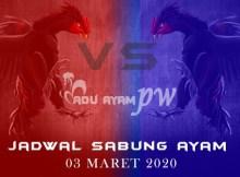 Jadwal Resmi Sabung Ayam Indonesia 03 Maret 2020