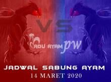 Jadwal Pertandingan Adu Ayam Online 14 Maret 2020