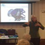 ALI 2019 Spider Class Prof. Shillington