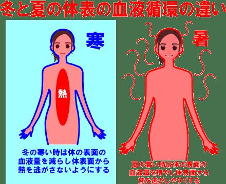 体表の血流の少ない冬は肌の働きが低下し、血流の多い夏は肌の働きが高まります