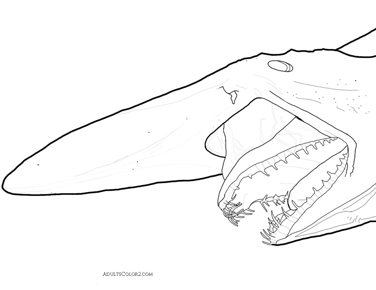 Shark Coloring Pages: Toothy Terrors?