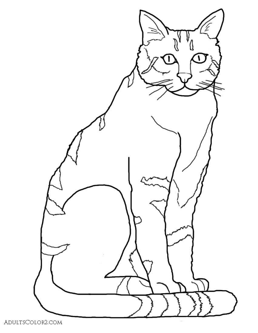 Cat Coloring Pages: Pint-Sized Pumas On Parade