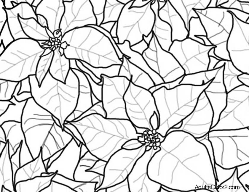 poinsettia coloring sheet for adults coloring pages