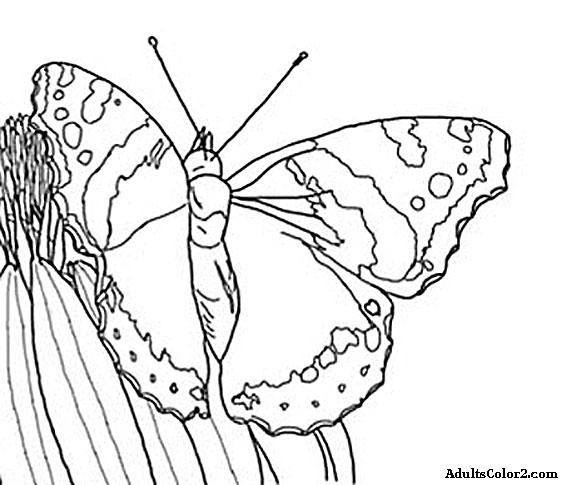 Butterfly Coloring Pages: Airborne Art