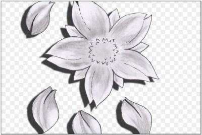 Sketsa Bunga Sakura Yang Mudah