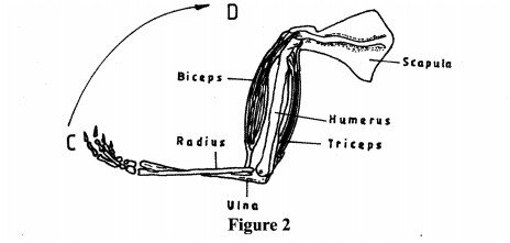 Human Arm in General Sciences