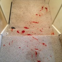 how to remove hair dye stains from carpet - Home The Honoroak