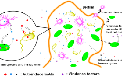 Autoinducers, Biofilm, Bacterial Density, Quorum Sensing,