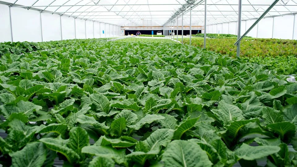 Organic Hydroponic Gardening - Facts and Advantages