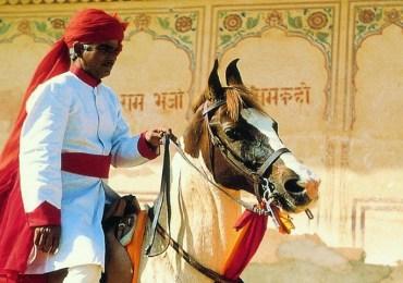 Regal Horse Ride with Taj