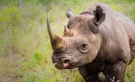 swaziland 8