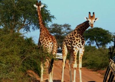 3 days murchison falls safari, Uganda