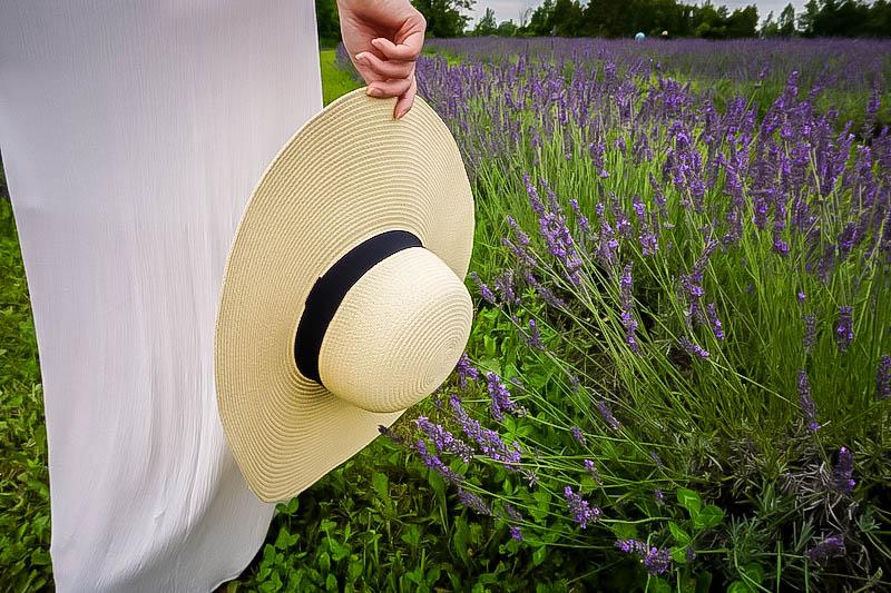 Terre Bleu Lavender Farm 1