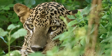 Wildlife Tours in Sri Lanka