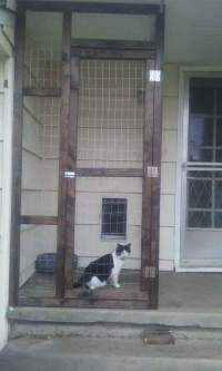 Catio Hacks Every Cat Owner Should Know