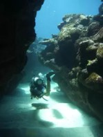 Scuba dive Rarotonga