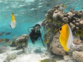 Intro Lagoon Dive in Rarotonga