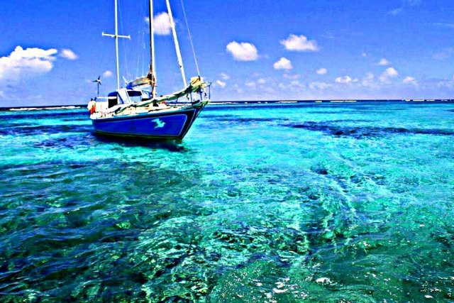 How to swim with sharks Caye Caulker Belize Sailboat tour