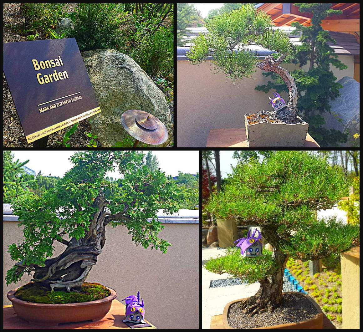 Richard & Helen DeVos Japanese Garden Japanese Bonsai Garden Meijer Gardens Adventure Dragon