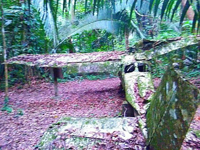 Belize Jungle plane wreck trail hike Cockscomb Basin Wildlife Sanctuary Jaguar Reserve