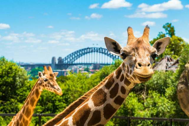 Taronga Zoo Roar and Snoar - Unusual Quirky Hotels in Australia Unique Stays Sleep in a Zoo