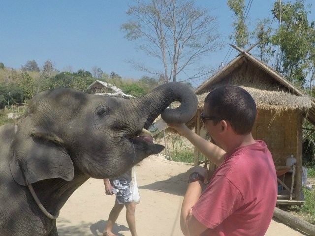 Joel feeding a baby elephant a bottle