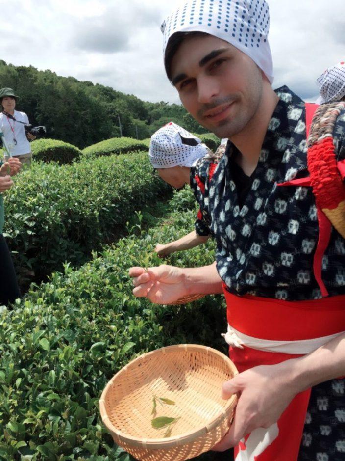 Picking Tea in Shizuoka, Japan