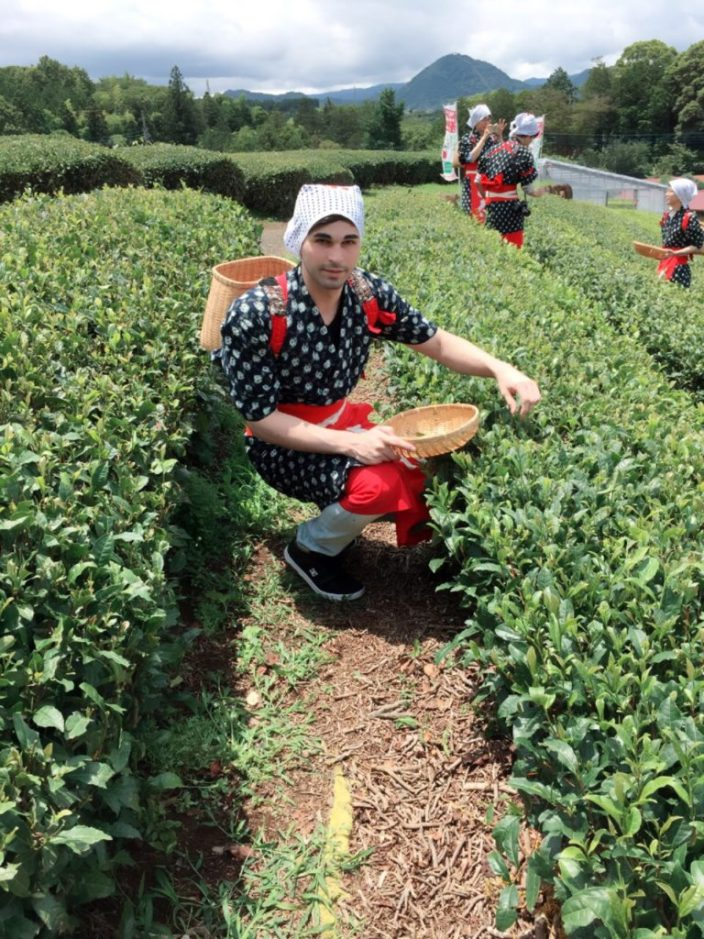 Picking Tea In Japan