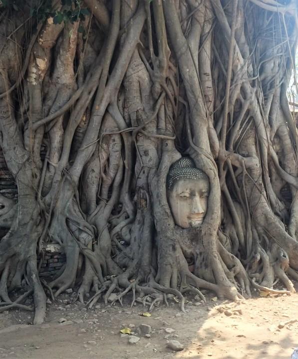 Buddha head in tree - Ayutthaya