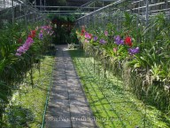 Chiang-Mai-Butterfly-and-Orchid-Garden