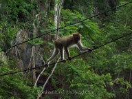 Khao-Sok-Monkeys3