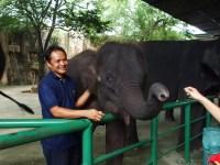 Sriracha-Tiger-Zoo-Elephant3