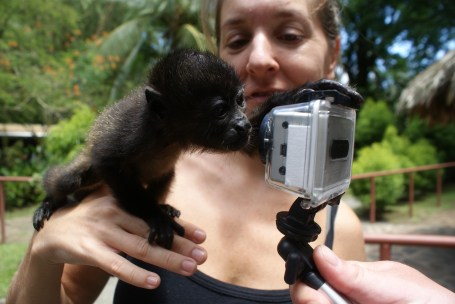 Baby Howler Monkey getting curious with the Go Pro.