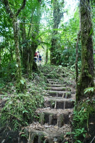 The jungle staircase