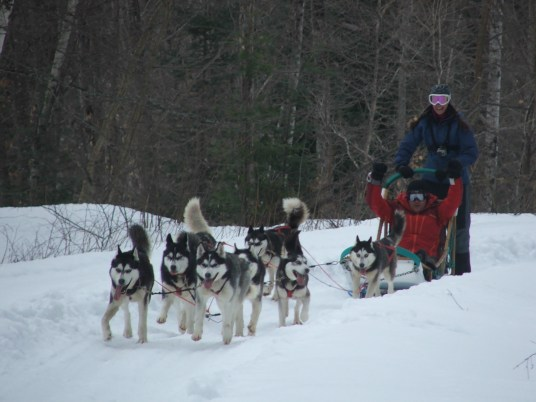 Dog sledding in Quebec, Canada