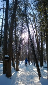 Snowshoeing through the forest.