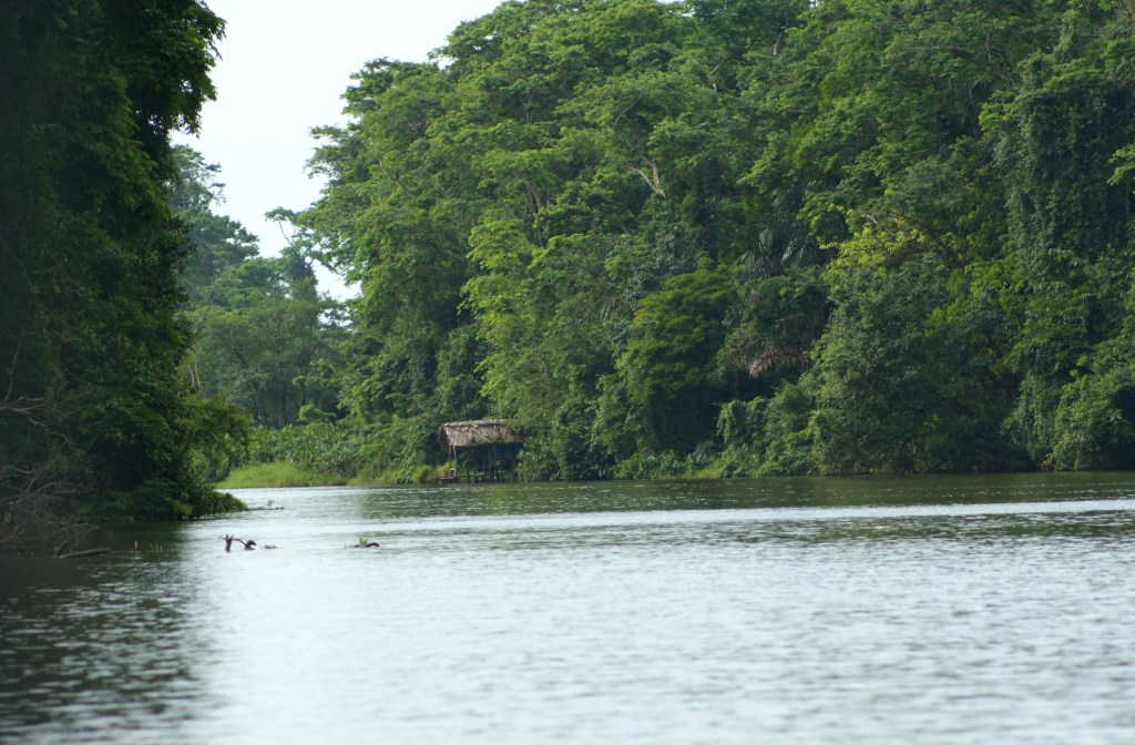 Navigating the jungle canals en route to Tortuguero.