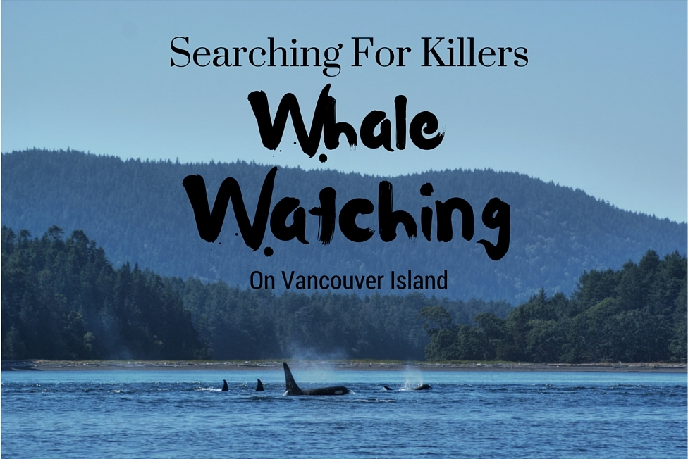 Searching For Killers: Whale Watching on Vancouver Island