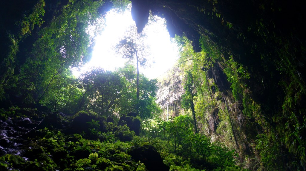 Looking up from the bottom of Jomblang Cave.