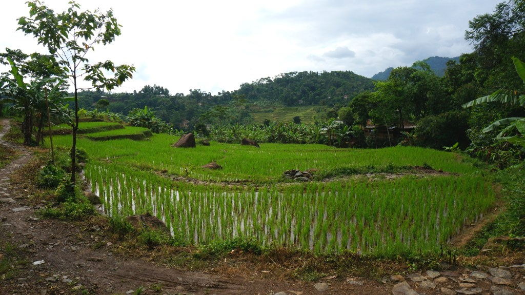 More rice terraces.